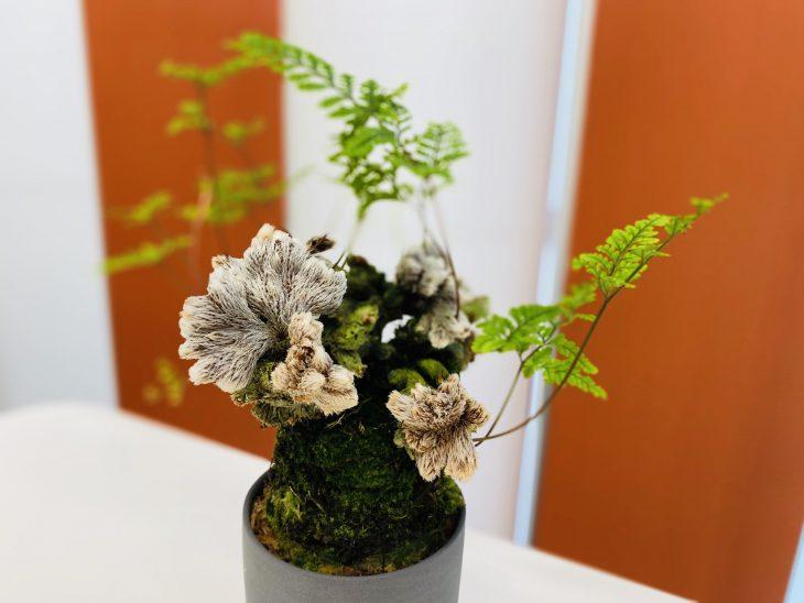 植物ファミリー〜オフィスの癒し〜